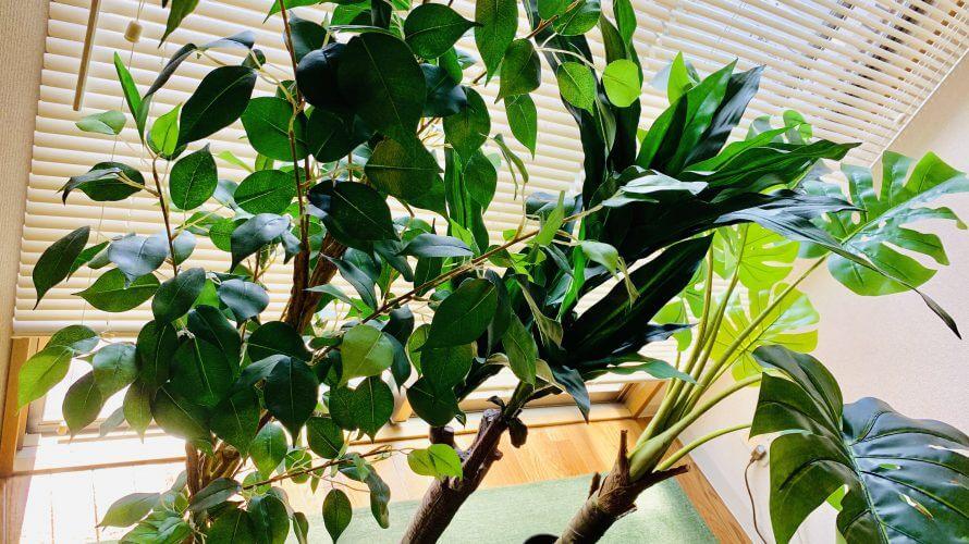 ニトリの観葉植物が高コスパで大満足!フェイクグリーンなら虫も気にせず置くことができます!